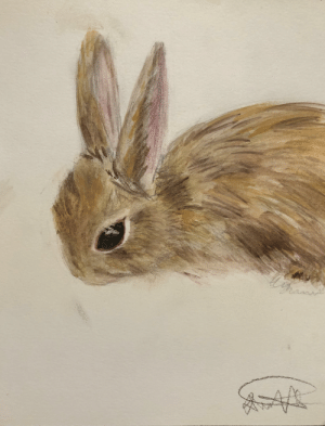 A water color painting of a wild bunny rabbit: A water color painting of a wild bunny rabbit