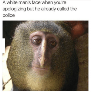 This one hit hard by Telesuru FOLLOW HERE 4 MORE MEMES.: A white man's face when you're  apologizing but he already called the  police This one hit hard by Telesuru FOLLOW HERE 4 MORE MEMES.