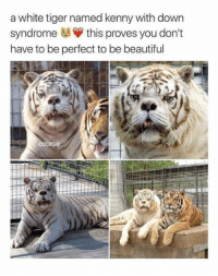 Beautiful, Memes, and Down Syndrome: a white tiger named kenny with down  syndrome this proves you don't  have to be perfect to be beautiful  Course