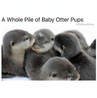 Bruh, Cute, and Lol: A Whole Pile of Baby Otter Pups  DrSmashlove  (a GET OTTER HERE BRUH WHAT OTTER ANIMAL IS THIS CUTE LOL THIS IS OTTERLY ADORABLE (I'm stupid 🤗😂) (@dizzle_saint_james)
