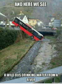 Drinking, Water, and Wild: A WILD BUS DRINKING WATER FROMA  RIVER  MEMEFUL.COM and here we see a wild bus drinking water from a river.