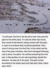 """Go like Creepy Society: """"A wolf pack: the first 3 are the old or sick, they give the  pace to the entire pack. If it was the other way round,  they would be left behind, losing contact with the pack.  In case of an ambush they would be sacrificed. Then  come 5 strong ones, the front line. In the center are the  rest of the pack members, then the 5 strongest following.  Last is alone, the alpha. He controls everything from the  rear. In that position he can see everything, decide the  direction. He sees all of the pack. The pack moves  according to the elders pace and help each other, watch  each other."""" Go like Creepy Society"""