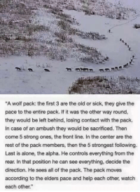 """other-way-round: """"A wolf pack: the first 3 are the old or sick, they give the  pace to the entire pack. If it was the other way round,  they would be left behind, losing contact with the pack.  In case of an ambush they would be sacrificed. Then  come 5 strong ones, the front line. In the center are the  rest of the pack members, then the 5 strongest following.  Last is alone, the alpha. He controls everything from the  rear. In that position he can see everything, decide the  direction. He sees all of the pack. The pack moves  according to the elders pace and help each other, watch  each other."""""""