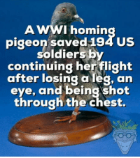 "Club, Soldiers, and Tumblr: A wwI homing us  pigeon saved 194 Us  soldiers by  continuing herflight  after losing a leg, an  eye, and being shot  through the chest. <p><a href=""http://laughoutloud-club.tumblr.com/post/176205532384/the-real-hero"" class=""tumblr_blog"">laughoutloud-club</a>:</p>  <blockquote><p>The real hero</p></blockquote>"