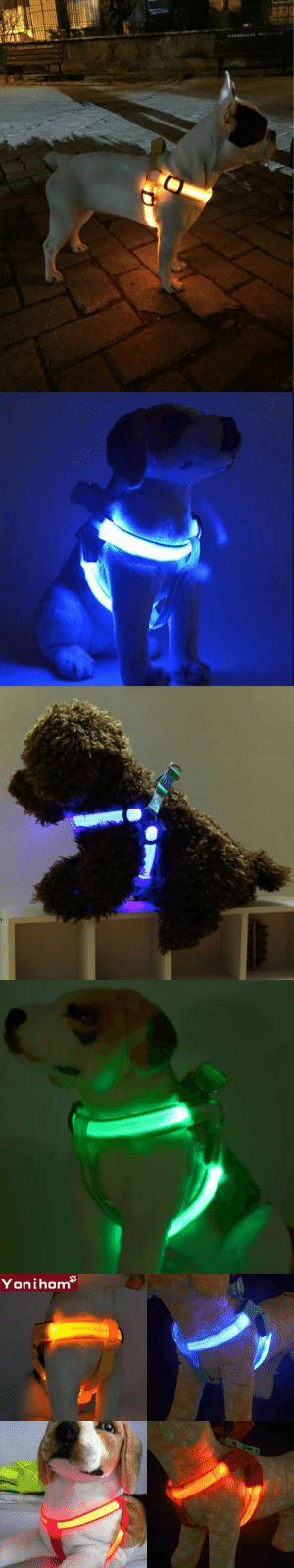 "awesomage:   The LED Harness enables you  to locate your dog at night so be easily seen from a great distance, keeping it safe from night traffic accidents. SPECIAL DISCOUNT OF 30% OFF PLUS FREE SHIPPING WITH COUPON CODE ""CUDDLING"" For every sale made, a rescue dog is fed!   https://www.doggiemon.com/products/led-harness : A1KAMAGLAR RELERVS  BILIRALLAN JOI   Yonihom  E3  X1  EX awesomage:   The LED Harness enables you  to locate your dog at night so be easily seen from a great distance, keeping it safe from night traffic accidents. SPECIAL DISCOUNT OF 30% OFF PLUS FREE SHIPPING WITH COUPON CODE ""CUDDLING"" For every sale made, a rescue dog is fed!   https://www.doggiemon.com/products/led-harness"