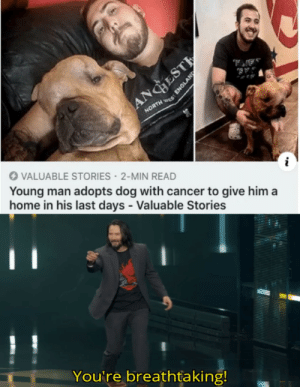 this is extremely wholesome: AA,  AB  ANGESTE  NORTH S  VALUABLE STORIES 2-MIN READ  Young man adopts dog with cancer to give him a  home in his last days - Valuable Stories  You're breathtaking!  ENGLAND this is extremely wholesome