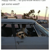 Bad, Lol, and Memes: Aayyy lol ile.... do you know where l Can  get some weed?  Some bull is Bad dog lookin for that good weed 😎 (Follow @some_bull_ish 👈 for more)