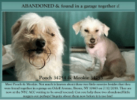 Andrew Bogut, Desperate, and Dogs: ABANDONED & found in a garage together :(  Pooch 34254 & Mookie 3425  Meet Pooch & Mookie. Not much is known about these two little sweeties besides that they  were found together in a garage on Orloff Avenue, Bronx, NY 10463 on 7/12/2018. They are  now at the NYC ACC waiting to be saved/rescued. Can you help these two abandoned little  nuggets out perhaps? Inquire about them now before it is too late! Meet Pooch & Mookie. Not much is known about these two little sweeties besides that they were found together in a garage on Orloff Avenue, Bronx, NY 10463 on 7/12/2018. They are now at the NYC ACC waiting to be saved/rescued. Can you help these two abandoned little nuggets out perhaps? Inquire about them now before it is too late!  AT NYC ACC Name: Pooch *Please keep in mind the name of the animal given by care center workers at intake may not match your pets name, especially if found as a stray with no source of identification. Animal ID 34254 Type Dog  Sex Unknown Spayed / Neutered Unknown Color White / None Age  Found Location Garage Orloff Avenue BRONX, 10463 Breed Small Mixed Breed Cross Date Found 7/12/2018  AT NYC ACC Name: Mookie *Please keep in mind the name of the animal given by care center workers at intake may not match your pets name, especially if found as a stray with no source of identification. Animal ID 34253 Type Dog  Sex Unknown Spayed / Neutered Unknown Color White / None Age  Found Location Garage Orloff Avenue BRONX, 10463 Breed Small Mixed Breed Cross Date Found 7/12/2018  ... NOTE: *** WE HAVE NO OTHER INFORMATION THAN WHAT IS LISTED WITH THIS FLYER *** ... – please email Adoption@NYCACC.org for additional info - SUBJECT Line: Enter animal ID number and the shelter location - Don't forget to add your email address and phone numbers where they can reach you to your email as well.  ============ Shelter address ========== - Brooklyn Shelter: 2336 Linden Boulevard Brooklyn, NY 11208  - Manhattan Shelter: 326 Eas