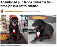 Abandoned pup lands himself a full-  time job in a petrol station  Hattie Gladwell for Metro.co.uk Thursday 16 Feb 20179:05 am  (Picture: Sabrina Plannerer/Cover Images) Somewhere in the world, a person lost the job to a dog. -Tag peeps! -Follow! -Like some posts! dogs dog doge dogsofinsta doğumgünü dogstagram doğa doglove doggies doglovers dankmemes dank dankmeme meme memes vet owner catsofinstagram cat catstagram cats catlover catlovers catsagram catlove