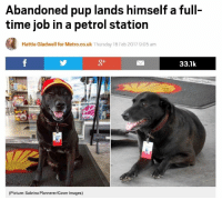 """<p>Goodest boy via /r/wholesomememes <a href=""""http://ift.tt/2yQOqB6"""">http://ift.tt/2yQOqB6</a></p>: Abandoned pup lands himself a full-  time job in a petrol station  Hattie Gladwell for Metro.co.uk Thursday 16 Feb 2017 9:05 am  g+  33.1k  (Picture: Sabrina Plannerer/Cover Images) <p>Goodest boy via /r/wholesomememes <a href=""""http://ift.tt/2yQOqB6"""">http://ift.tt/2yQOqB6</a></p>"""