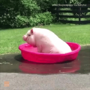 Actual footage of me this summer... 😂: abby thepinkpiggy via Storyful  ÁN  itoryfu Actual footage of me this summer... 😂