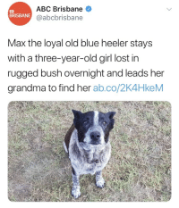 <p>The Goodest Boy</p>: ABC Brisbane  @abcbrisbane  BRISBANE  Max the loyal old blue heeler stays  with a three-year-old girl lost in  rugged bush overnight and leads her  grandma to find her ab.co/2K4HkeM <p>The Goodest Boy</p>
