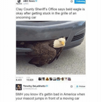 Abc, America, and Bad: ABC News  Following  NEWS  ABC  Clay County Sheriff's Office says bald eagle is  okay after getting stuck in the grille of an  oncoming car  8.433  15,829  Timothy DeLaGhetto  Follow  @Timothy DeLaG  SMH you know it's gettin bad in America when  your mascot jumps in front of a moving car