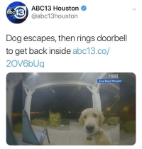 Abc13, Good, and Houston: ABC13 Houston  @abc13houston  Dog escapes, then rings doorbell  to get back inside abc13.co/  2OV6bUq  nest  Greg Basel/Storyful This good boy knows where he lives