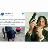 News, Abc7, and Girl Memes: ABC7 News  @abc7newsbayarea  BAY AREA  Someone in Washington state stole  a wheelchair from a disabled dog  abc7news/2bORwZ4 😂😂😂😂😂