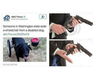 me irl by buyingaspaceship FOLLOW HERE 4 MORE MEMES.: ABC7 News  @abc7newsbayarea  DAY AREA  Someone in Washington state stole  a wheelchair from a disabled dog  abc7news/2bORwZ4  8/17/16, 9:29 PM me irl by buyingaspaceship FOLLOW HERE 4 MORE MEMES.