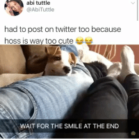Be sure to follow my page @kalesaladanimals for more animal videos in your life everyday: abi tuttle  @AbiTuttle  had to post on twitter too because  hoss is way too cute  WAIT FOR THE SMILE AT THE END Be sure to follow my page @kalesaladanimals for more animal videos in your life everyday
