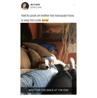 Cute, Memes, and Twitter: abi tuttle  @AbiTuttle  had to post on twitter too because hoss  is way too cute  WAIT FOR THE SMILE AT THE END this makes me SO HAPPY 😍 (@abituttle on Twitter)