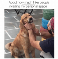 Memes, Space, and 🤖: About how much l like people  invading my personal space  @dogsbeingbasic  @goidendonald Please talk to me from 12 feet away thanks. Follow @goldendonald for more Golden cuteness
