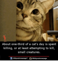 Cats, Memes, and 🤖: About one-third of a cat's day is spent  killing, or at least attempting to kill  small creatures  f/didyouknowpagel@didyouknowpage