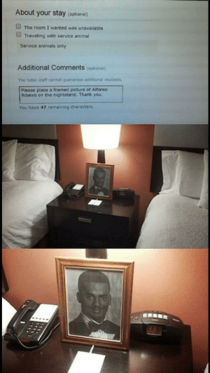 Alfonso Ribeiro, Animals, and Tumblr: About your stay (optional)  The room I wanted was unavailable  Traveling with service animal  Service animals only  Additional Comments (optional)  The hotel staff cannot guarantee additional requests  Please place a framed picture of Alfonso  Ribeiro on the nightstand. Thank you  You have 47 remaining characters memehumor:  I'd stay there