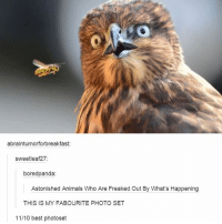 Animals, Memes, and Best: abraintumorforbreakfast  sweetleaf27  boredpanda:  Astonished Animals Who Are Freaked Out By What's Happening  THIS IS MY FABOURITE PHOTO SET  11/10 best photoset goodnight ✌🏻