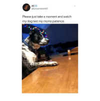 Memes, Moms, and Twitter: AC  @lyssamarie007  Please just take a moment and watch  my dog test my moms patience. i'm screaming 😂 (@lyssamarie007 on Twitter)