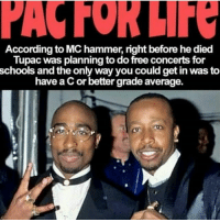 tbt throwbackthursday 2pac tupac tupacshakur makavelithedon thuglife outlawz westside mchammer: According to MC hammer, right before he died  Tupac was planning to do free concerts for  schools and the only way you could get in was to  have a Cor better grade average. tbt throwbackthursday 2pac tupac tupacshakur makavelithedon thuglife outlawz westside mchammer