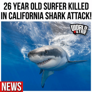 According to reports, a 26 year old surfer was killed in a shark attack at Sand Dollar Beach in Northern California. The person was pronounced dead on the scene around 1:30 yesterday afternoon. The species of shark is still unidentified. https://t.co/J8OMMDgSZk: According to reports, a 26 year old surfer was killed in a shark attack at Sand Dollar Beach in Northern California. The person was pronounced dead on the scene around 1:30 yesterday afternoon. The species of shark is still unidentified. https://t.co/J8OMMDgSZk