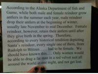 Memes, Alaska, and Spring: According to the Alaska Department of fish and  Game, while both male and female reindeer grow  antlers in the summer each year, male reindeer  drop their antlers at the beginning of winter,  usually late November to mid December. Female  reindeer, however, retain their antlers until after  they give birth in the spring. Therefore,  according to every historical rendition depicting  Santa's reindeer, every single one of them, from  Rudolph to Blitzen  had to be female. We  should have known this  Only women would  be able to drag a fat man in a red velvet suit all  around the world in one night, and not get lost. #lilahdelilah