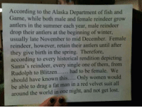 Memes, Winter, and Summer: According to the Alaska Department of fish and  Game, while both male and female reindeer grow  antlers in the summer each year, male reindeer  drop their antlers at the beginning of winter,  usually late November to mid December. Female  reindeer, however, retain their antlers until after  they give birth in the spring. Therefore,  according to every historical rendition depicting  Santa's reindeer, every single one of them, from  Rudolph to Blitzen  had to be female. We  should have known this  Only women would  be able to drag a fat man in a red velvet suit all  around the world in one night, and not get lost. LOL❤️