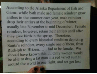 Memes, Winter, and Summer: According to the Alaska Department of fish and  Game, while both male and female reindeer grow  antlers in the summer each year, male reindeer  drop their antlers at the beginning of winter,  usually late November to mid December. Female  reindeer, however, retain their antlers until after  they give birth in the spring. Therefore,  according to every historical rendition depicting  Santa's reindeer, every single one of them, from  Rudolph to Blitzen  had to be female. We  should have known this  Only women would  be able to drag a fat man in a red velvet suit all  around the world in one night, and not get lost. Should've known...