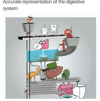 Wow, Accurate Representation, and Black Twitter: Accurate representation of the digestive  system wow