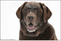 Happy face in the snow :-): acebook.com/resselandhannes Happy face in the snow :-)