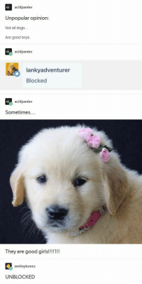 Dogs, Tumblr, and Good: acidpanter  Unpopular opinion:  Not all dogs..  Are good boys.  acidpanter  lankyadventurer  Blocked  acidpanter  Sometimes...  ey are good giris  smileybonez  UNBLOCKED <p>A short debate about puppers (from r/tumblr)</p>