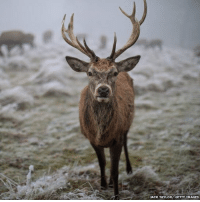 The UK images that made the news in 2017 (1-7): 1. A red deer in Richmond Park, London. Taken in January through fog and freezing temperatures. 2. Prince Harry and American actress Meghan Markle announce their engagement outside Kensington Palace. 3. A passenger plane, with a Harvest Moon behind, prepares to land at Heathrow Airport in London. 4. Hundreds of thousands of revellers descend on Notting Hill in west London for the annual carnival. 5. A fire at Grenfell Tower, west London, claims the lives of 71 people, including 18 children. 6. The Duchess of Cambridge joins Paddington Bear for a dance on a platform at Paddington Station. 7. Activist Saffiyah Khan and protestor Ian Crossland face off during an English Defence League protest in Birmingham, UK. (All photographs are copyrighted.) For more: http:-bbc.in-2DqKl4S: ACK TAYLOR GETTYIMAGES The UK images that made the news in 2017 (1-7): 1. A red deer in Richmond Park, London. Taken in January through fog and freezing temperatures. 2. Prince Harry and American actress Meghan Markle announce their engagement outside Kensington Palace. 3. A passenger plane, with a Harvest Moon behind, prepares to land at Heathrow Airport in London. 4. Hundreds of thousands of revellers descend on Notting Hill in west London for the annual carnival. 5. A fire at Grenfell Tower, west London, claims the lives of 71 people, including 18 children. 6. The Duchess of Cambridge joins Paddington Bear for a dance on a platform at Paddington Station. 7. Activist Saffiyah Khan and protestor Ian Crossland face off during an English Defence League protest in Birmingham, UK. (All photographs are copyrighted.) For more: http:-bbc.in-2DqKl4S