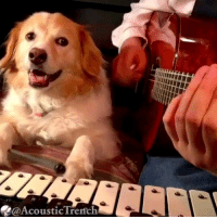 9gag, Memes, and Music: @AcousticTrerfch @AcousticTrench playing Feel Good Inc. ft @maple.the.pup on the Glockenspiel, purrfect. 🎸 Follow @9gag - - - 9gag fingerstyle gorillaz feelgoodinc artist music