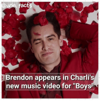 "HE IS SO HOT IN THAT RED SUIT: act  Brendon appears in Charli  new music video for ""Boys HE IS SO HOT IN THAT RED SUIT"