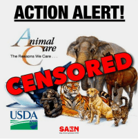 IMMEDIATE ACTION NEEDED: Demand USDA RESTORE Online Databases!   As taxpayers and people who care about animals this is imperative!  On Friday, USDA's Animal Care Division removed from their website CRUCIAL info about criminal animal labs, dealers, breeders, etc. Despite USDA's flimsy smokescreen, this info contains virtually NO personal data, and has been available online for years. This action PROTECTS animal abusers from public scrutiny, AND MUST NOT STAND!!    URGENT - ACT NOW !!! ➔ ➔ TELL USDA to RESTORE ACIS system & all Enforcement Actions!  CALL: (301) 851-2735 EMAIL: Bernadette.R.Juarez@aphis.usda.gov TWEET: http://ctt.ec/2h798  Sample Message:  USDA Deputy Administrator Bernadette Juarez, Please restore the ACIS system as well as all Enforcement Action documents to the USDA/APHIS website immediately! This removal does nothing more than protect criminal labs, dealers, breeders, etc from public scrutiny.  ➔ ➔ SHARE THIS POST to spread the word!  ➔ ➔  HELP SAEN fight this: http://SAENonline.org/donation.html  All opinions contained in this post are those of SAEN, and no attribution to USDA is intended by any parody of USDA branding.  #SAENonline #NOTFakeNews #taxdollars #wastedlives #wastedhope #coverup #suppression #govt #secrecy #stopanimaltesting #stopanimalabuse #stopanimalcruelty #stopanimaltorture #biomedicalresearch #animalliberation #untileverycageisempty #vivisection #antivivisection #animal #animals #stopanimalexploitation #vegan #stopanimalexperiments #censorship #governmentwaste #bipartisan: ACTION ALERT!  nimal  re  The Reasons We Care  USDA  APHI  SAEN  Stop Animal Exploitation Nowt IMMEDIATE ACTION NEEDED: Demand USDA RESTORE Online Databases!   As taxpayers and people who care about animals this is imperative!  On Friday, USDA's Animal Care Division removed from their website CRUCIAL info about criminal animal labs, dealers, breeders, etc. Despite USDA's flimsy smokescreen, this info contains virtually NO personal data, and has been available online for years. This action PROTECTS animal abusers from public scrutiny, AND MUST NOT STAND!!    URGENT - ACT NOW !!! ➔ ➔ TELL USDA to RESTORE ACIS system & all Enforcement Actions!  CALL: (301) 851-2735 EMAIL: Bernadette.R.Juarez@aphis.usda.gov TWEET: http://ctt.ec/2h798  Sample Message:  USDA Deputy Administrator Bernadette Juarez, Please restore the ACIS system as well as all Enforcement Action documents to the USDA/APHIS website immediately! This removal does nothing more than protect criminal labs, dealers, breeders, etc from public scrutiny.  ➔ ➔ SHARE THIS POST to spread the word!  ➔ ➔  HELP SAEN fight this: http://SAENonline.org/donation.html  All opinions contained in this post are those of SAEN, and no attribution to USDA is intended by any parody of USDA branding.  #SAENonline #NOTFakeNews #taxdollars #wastedlives #wastedhope #coverup #suppression #govt #secrecy #stopanimaltesting #stopanimalabuse #stopanimalcruelty #stopanimaltorture #biomedicalresearch #animalliberation #untileverycageisempty #vivisection #antivivisection #animal #animals #stopanimalexploitation #vegan #stopanimalexperiments #censorship #governmentwaste #bipartisan