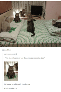 """Humans of Tumblr, Cat, and Messiah: actionables:  barrenwonderland  """"this doesn't concern you Robert please close the door  this is your new Messiah the glow cat  all hail the glow cat"""