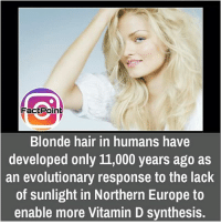 Memes, Europe, and Vitamin D: actPoin  Blonde hair in humans have  developed only 11,000 years ago as  an evolutionary response to the lack  of sunlight in Northern Europe to  enable more Vitamin D synthesis. did you know fact point , education amazing dyk unknown facts daily facts💯 didyouknow follow follow4follow f4f factpoint instafact awesome world worldfacts like like4ike tag friends Don't forget to tag your friends 🤘