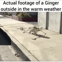 Hot Weather: Actual footage of a Ginger  outside in the warm weather