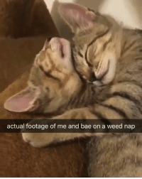 Bae, Mood, and Weed: actual footage of me and bae on a weed nap Mood 😻