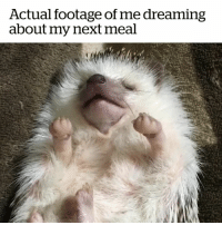 Food, Next, and Dream: Actual footage of me dreaming  about my next meal What food do you dream about? 😂😴