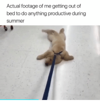 I can confirm this 😂: Actual footage of me getting out of  bed to do anything productive during  summe I can confirm this 😂