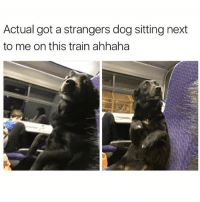 Funny, Meme, and Twitter: Actual got a strangers dog sitting next  to me on this train ahhaha Oh hai hooman (twitter: _domenica00)