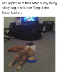@bonkers4memes has been making dank ass memes since 17 B.C.: Actual picture of the Easter bunny being  a lazy bag of shit after filling all the  Easter baskets @bonkers4memes has been making dank ass memes since 17 B.C.