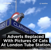 Cats, Dank, and Bible: AD bible  newsflare  Adverts Replaced  With Pictures Of Cats  At London Tube Station Every advert in a London Underground station has been replaced with cats 😹😹😹