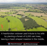 meadows: Adam Gray SWNS.com  A heartbroken widower paid tribute to his wife  by planting a forest of 6,000 oak trees,  leaving a heart-shaped meadow in the middle.  /didyouknowpagel  Cu  @didyouknowpage