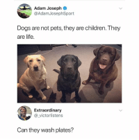 😄😄😄 Tag a dog lover ⬇️ . Follow @KraksHQ for more dog pet doglover 🐶: Adam Joseph  @AdamJosephSport  Dogs are not pets, they are children. They  are life.  Extraordinary  @victorlistens  Can they wash plates? 😄😄😄 Tag a dog lover ⬇️ . Follow @KraksHQ for more dog pet doglover 🐶